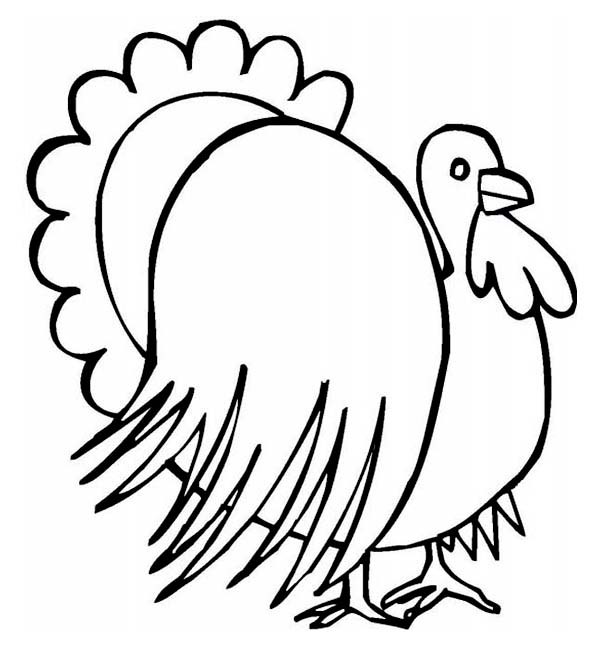 Thanksgiving Day, : Thanksgiving Day Turkey Drawing Coloring Page