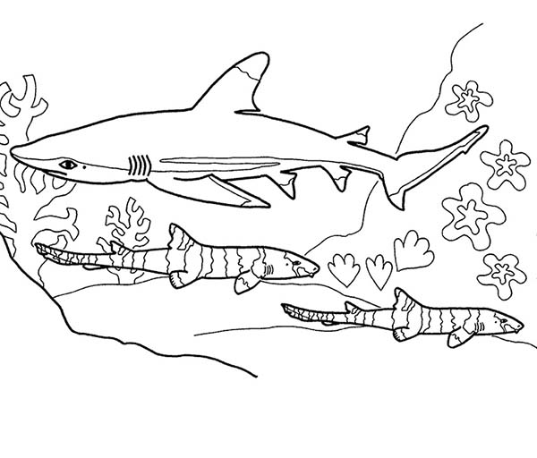 Sharks, : A Blue Shark Hunting on the Seabead Coloring Page