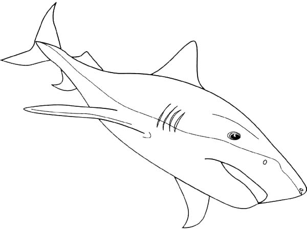 Sharks, : A Bull Shark is Looking for Prey Coloring Page