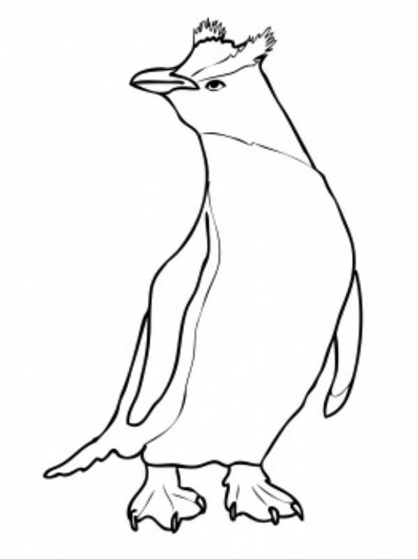 Penguins, : A Cool Drawing of Snares Penguin Coloring Page