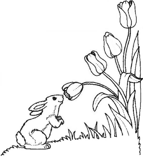 Tulips, : A Cute Little Bunny in Tulips Field Coloring Page