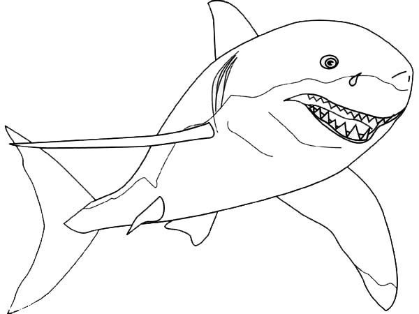 Sharks, : A Drawing of Great White Shark from the Front Coloring Page