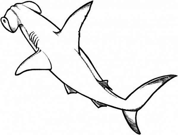 Sharks, : A Drawing of Hammerhead Shark from the Top Coloring Page