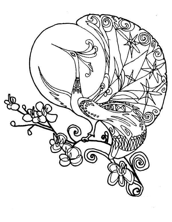 Peacock, : A Fantasy Drawing of Peacock Coloring Page