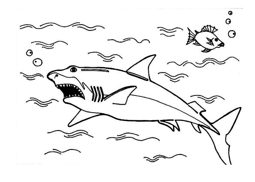 Sharks, : A Great White Shark is Hunting on the Ocean Surface Coloring Page