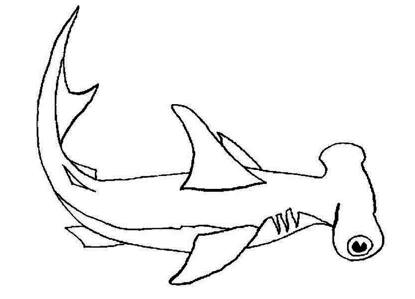 Sharks, : A Hammerhead Shark on Its Habitat Coloring Page