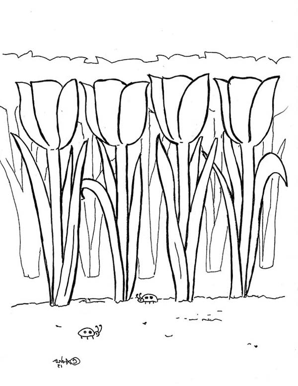 Tulips, : A Lovely Tulips Field in Amsterdam Coloring Page