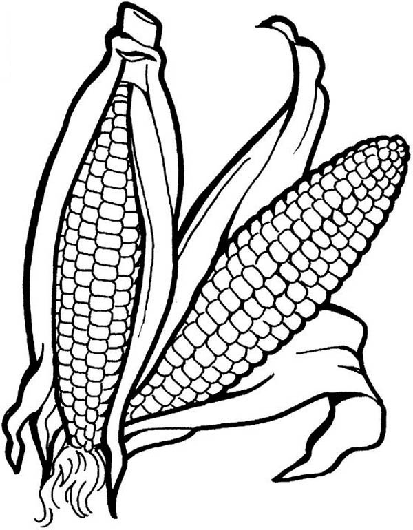 Fruits and Vegetables, : A Pair of Corn Vegetables Coloring Page