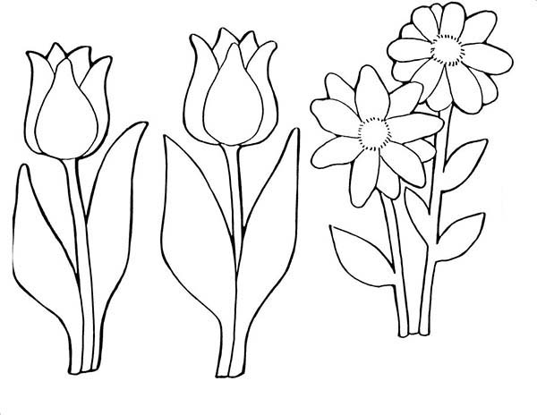 Tulips, : A Pair of Parrot Tulips and Daisy Coloring Page