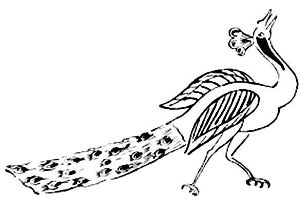 Peacock, : A Peacock Walking with His Dragged Long Train Coloring Page