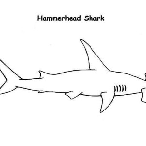 A Simple Drawing Of Blue Shark Coloring Page Kids Play Color