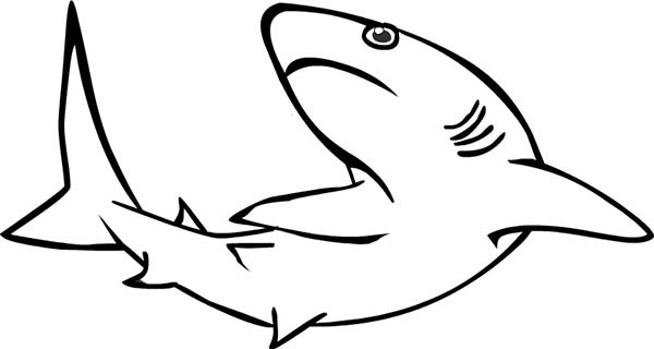 Sharks, : A Realistic Drawing of Reef Shark Coloring Page