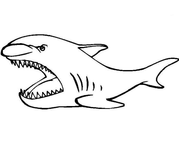 Sharks, : A Simple Drawing of Basking Shark Coloring Page