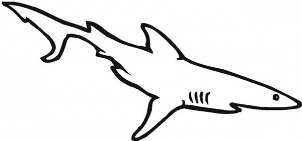 Sharks, : A Simple Drawing of White Tip Reef Shark Coloring Page