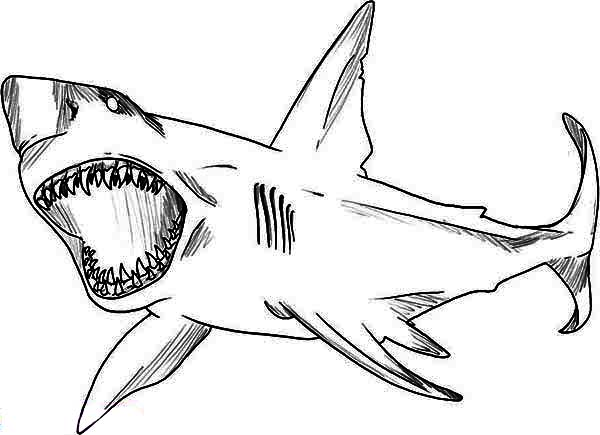 Sharks, : A Sketch Drawing of Great White Shark Coloring Page