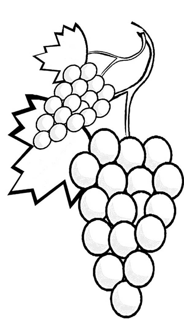 Fruits and Vegetables, : A Stalk of Grapes Coloring Page