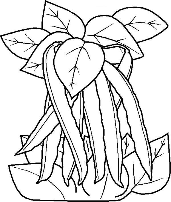 Fruits and Vegetables, : A Stalk of Green Bean Vegetables Coloring Page