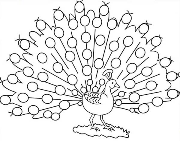 Peacock, : A Stunning Male Peacock Plumage Coloring Page