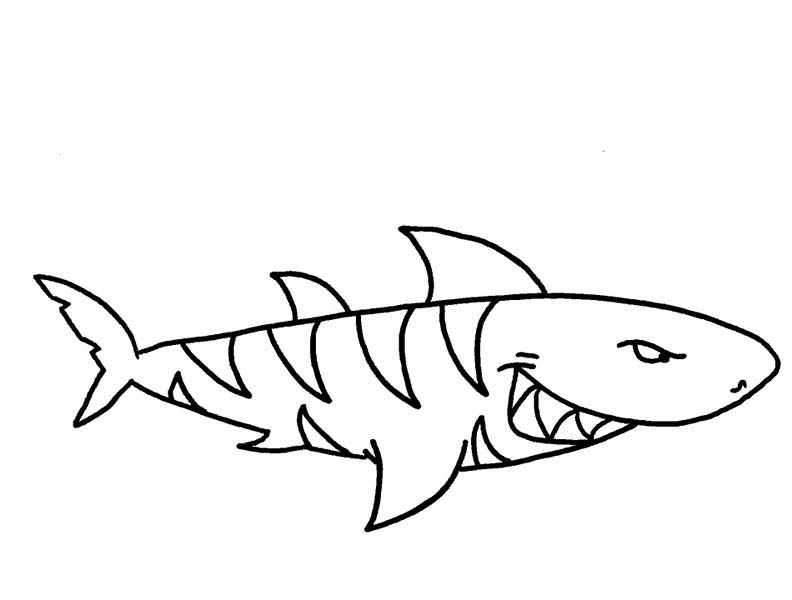 Sharks, : A Threatening Tiger Shark on Hunting Coloring Page