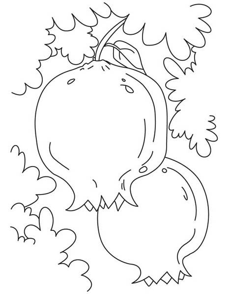 Fruits and Vegetables, : A pair of Guava Seasonal Fruits Coloring Page