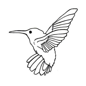 Flying Magnificent Hummingbird Coloring Page : Kids Play Color