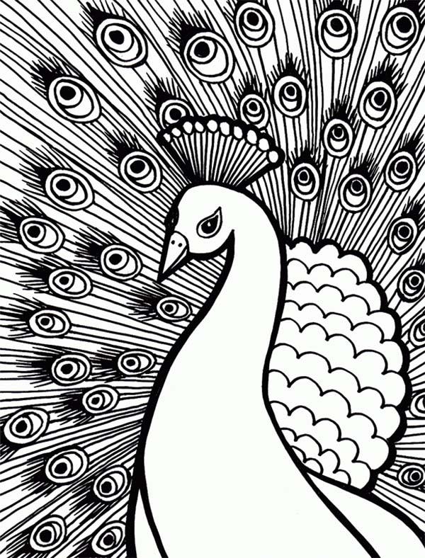 Peacock, : An Elegant Peacock with Stunning Plumage Feather Coloring Page
