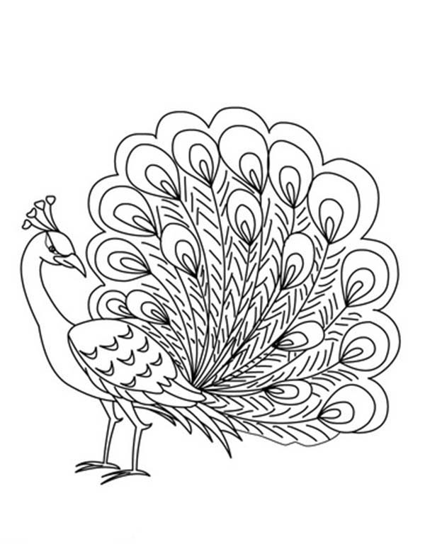 Peacock, : An Elegant Peafowl - Male Peacock Coloring Page