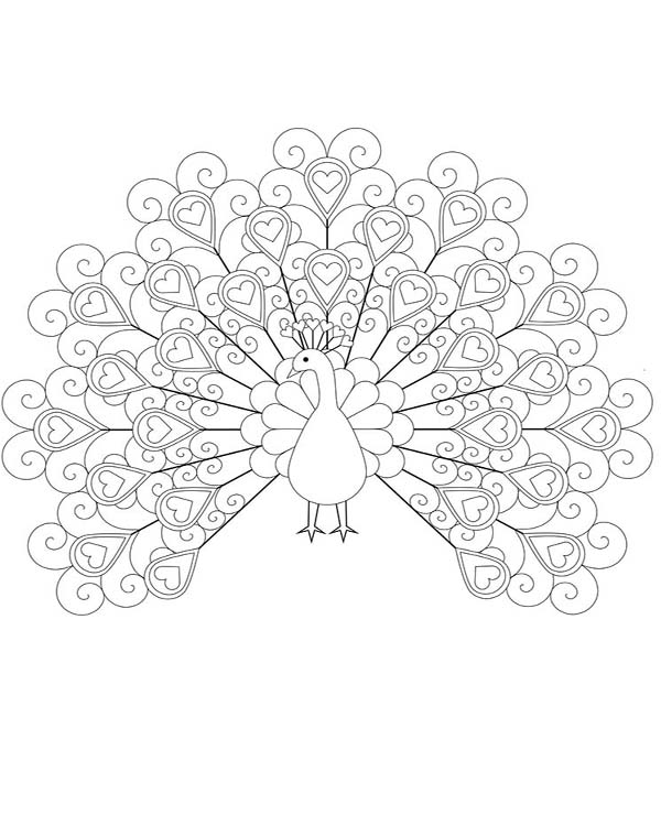 Peacock, : An Unique Loved Shaped Peacock Plumage Coloring Page