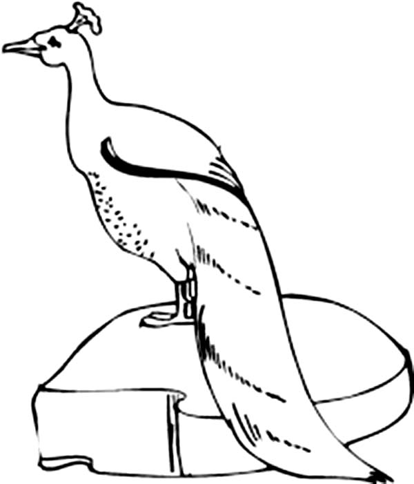 Peacock, : Beautiful Green Peacock in the Zoo Coloring Page