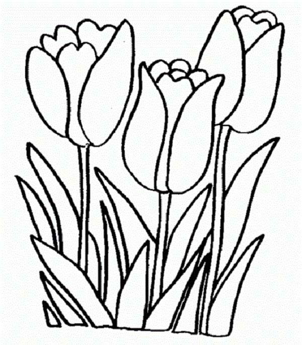 Tulips, : Beautiful Peony Tulips on the Field Coloring Page