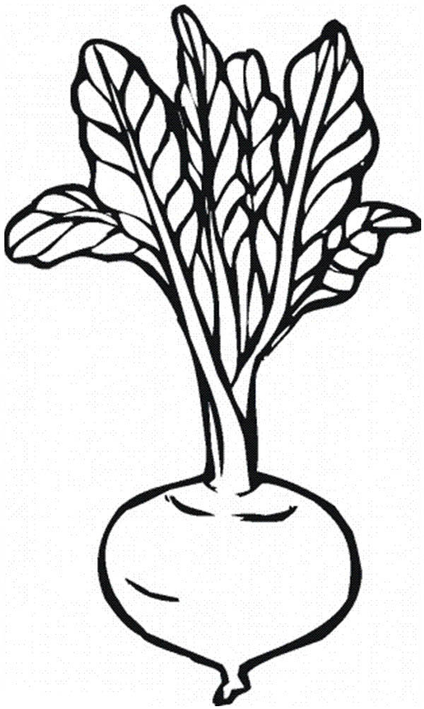 Fruits and Vegetables, : Beetroot Vegetables Coloring Page