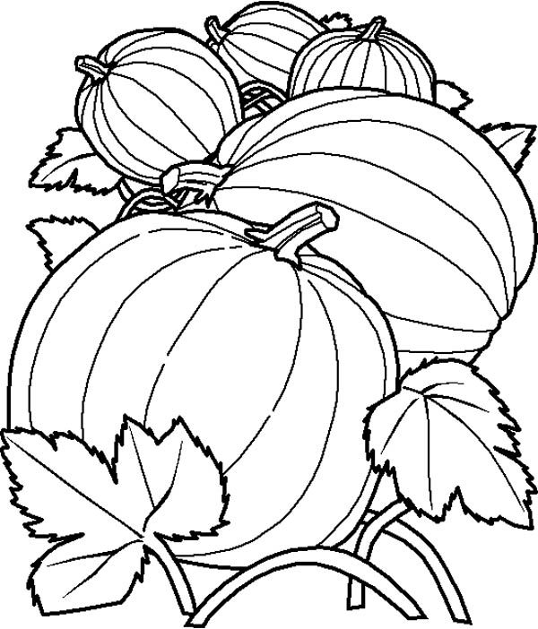 Fruits and Vegetables, : Couple of Pumpkins in the Field Coloring Page