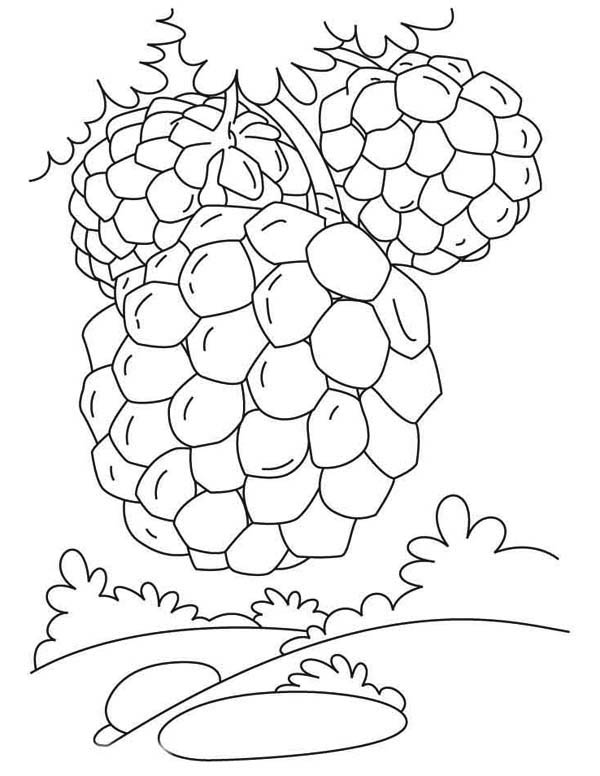 Fruits and Vegetables, : Custard Apple Vegetables Coloring Page