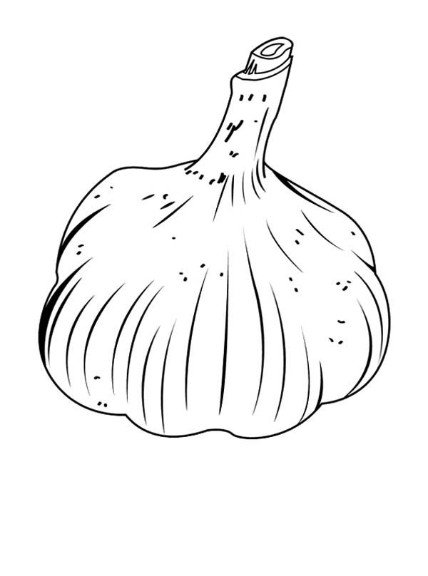 Fruits and Vegetables, : Garlic Vegetables Coloring Page