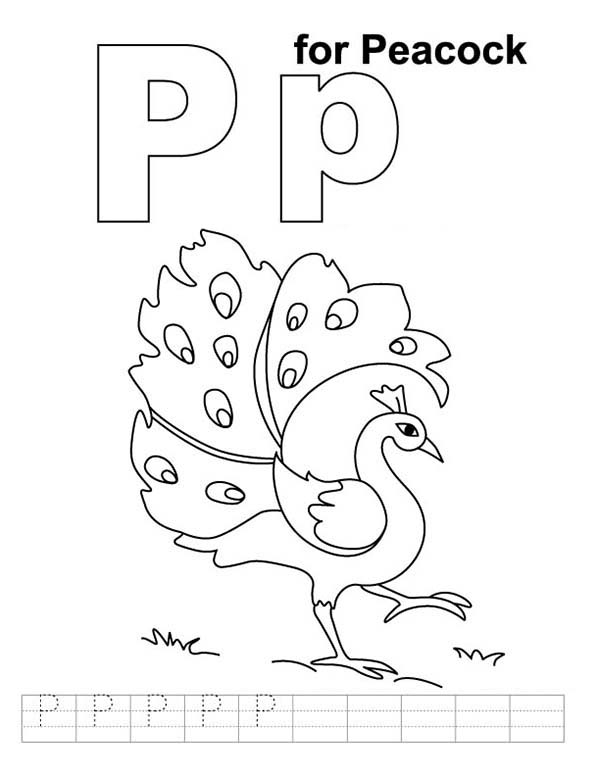 Peacock, : Learn Letter P for Peacock Coloring Page