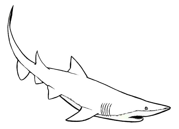 Sharks, : Mako Shark the Faster Swimmer of All Coloring Page
