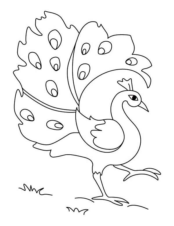 Peacock, : Simple Drawing of Green Peacock Coloring Page