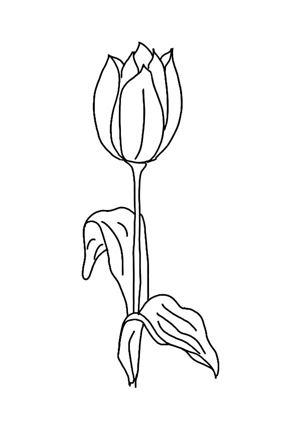 Tulips, : Single Peony Tulip for Decoration Coloring Page