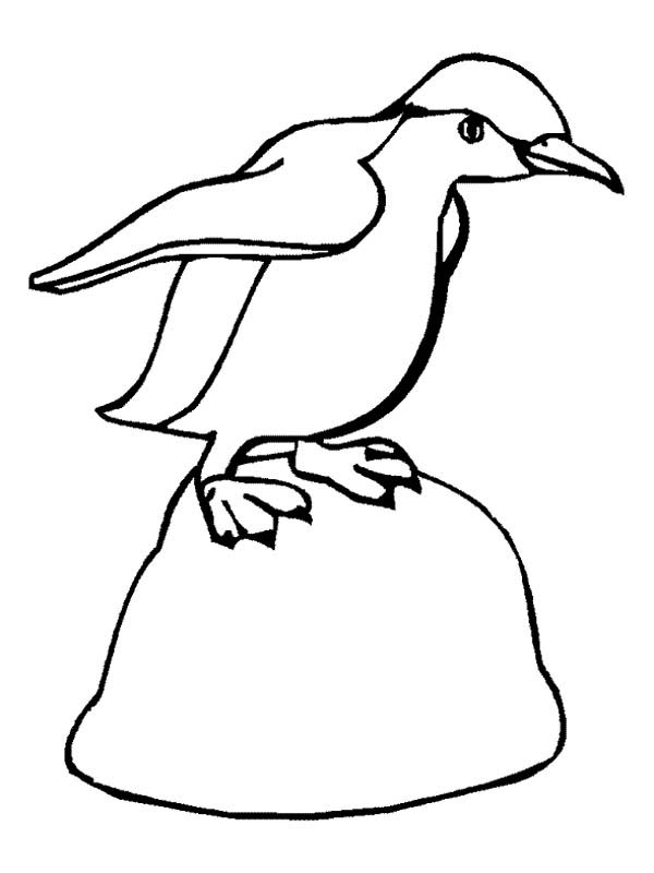 Penguins, : This Little Penguin is Ready to Jump Coloring Page