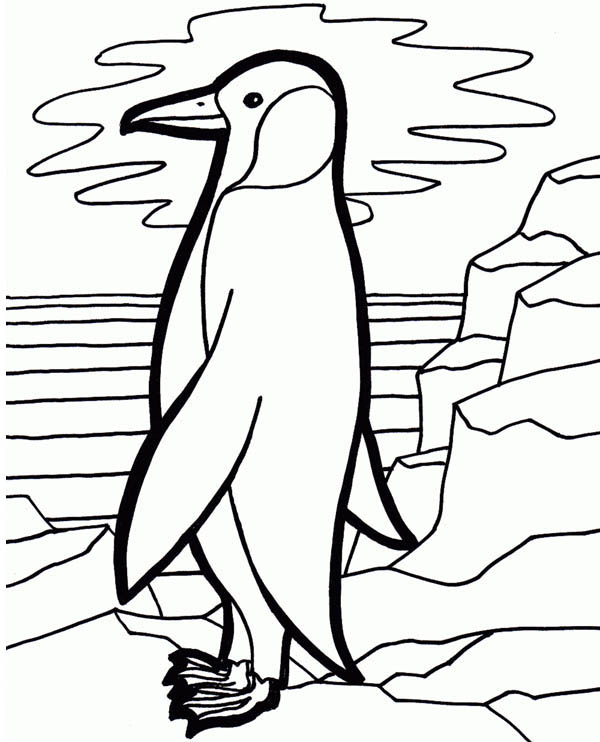 Penguins, : This Penguin Looking the Sunset on the Artic Coloring Page