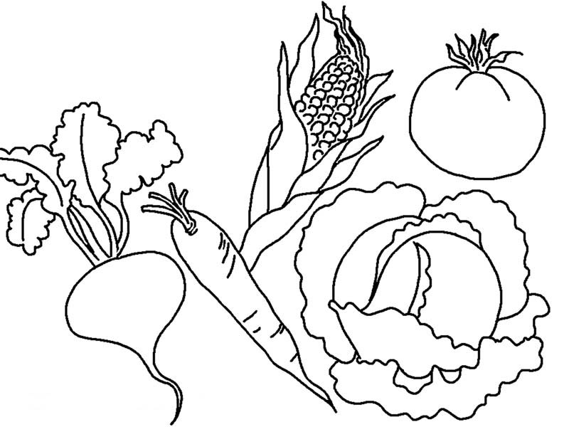 Fruits and Vegetables, : Various Types of Vegetables Coloring Page