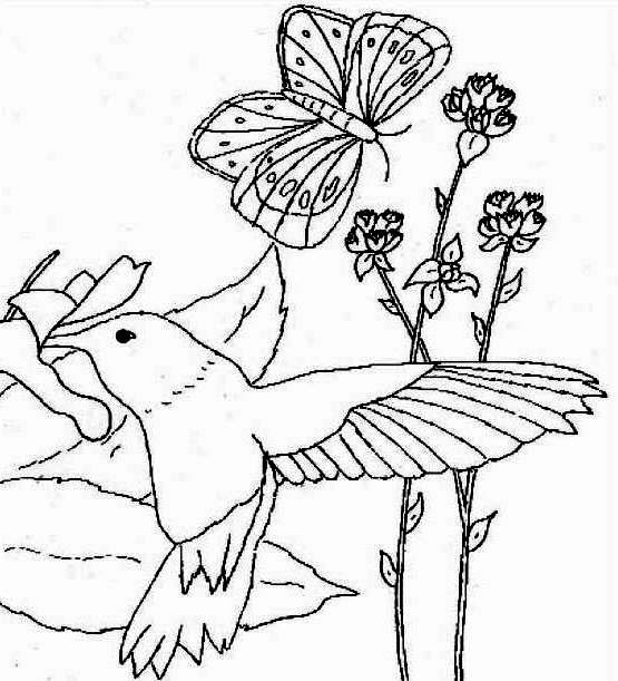 Hummingbirds, : a-hummingbird-an-a-butterfly-compete-for-nectar-coloring-page.jpg