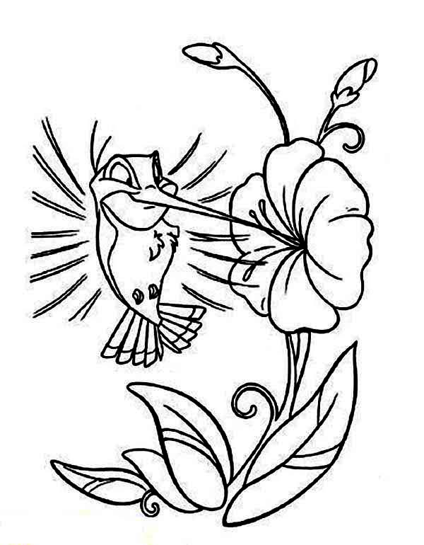 Cartoon Hummingbird Coloring Page : Kids Play Color