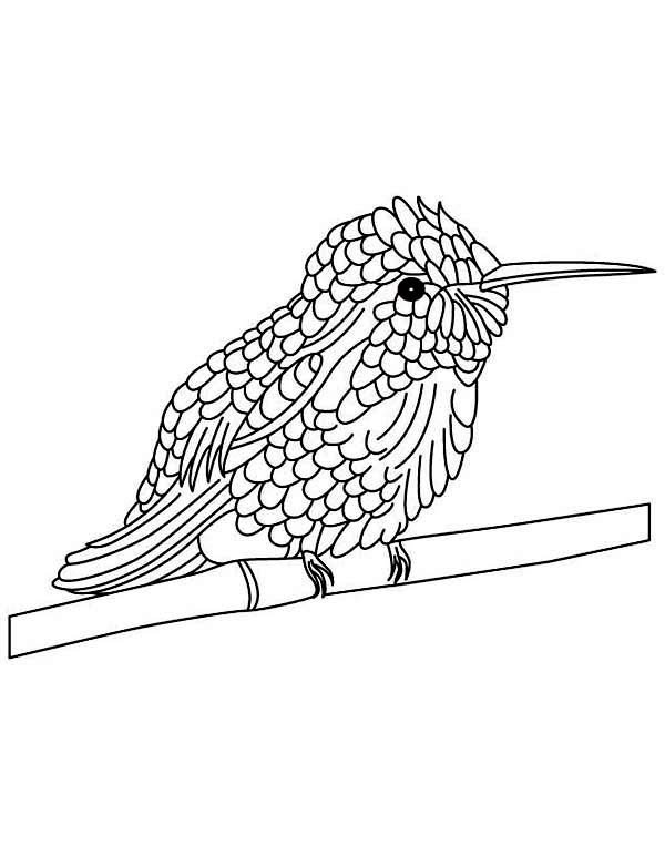 Hummingbirds, : cute-hummingbird-perched-in-tree-stems-coloring-page.jpg