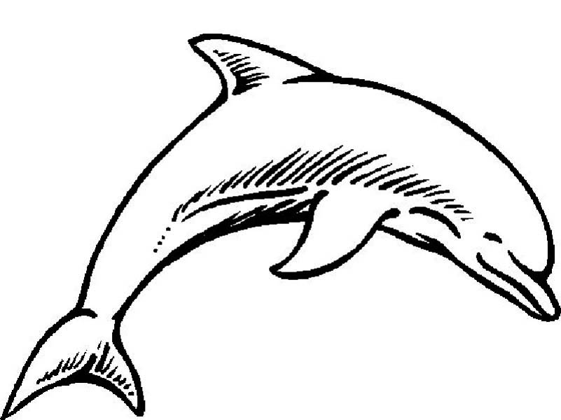 Dolphin, : dolphin-beauty-curve-page-to-color.jpg