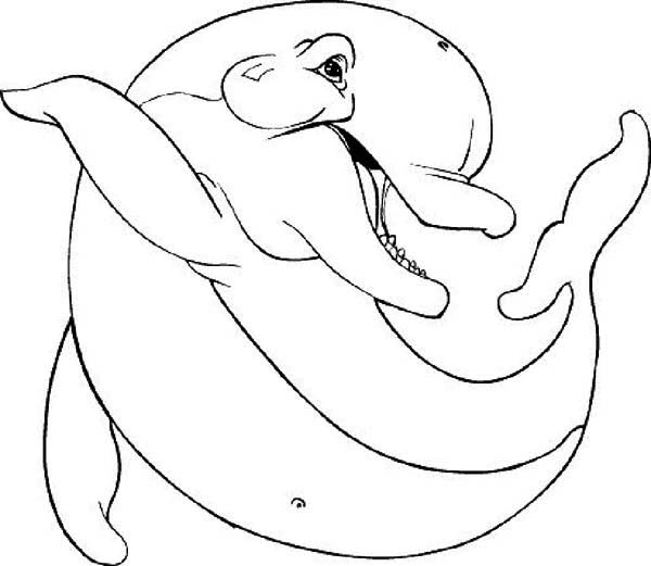 Dolphin, : fatty-dolphin-swagger-page-to-coloring.jpg
