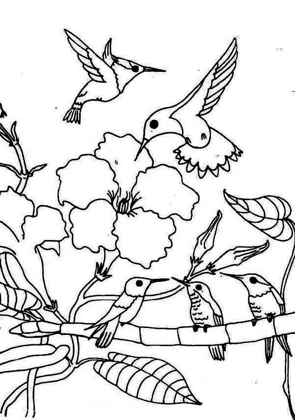 Hummingbirds, : gathering-season-of-hummingbird-coloring-page.jpg