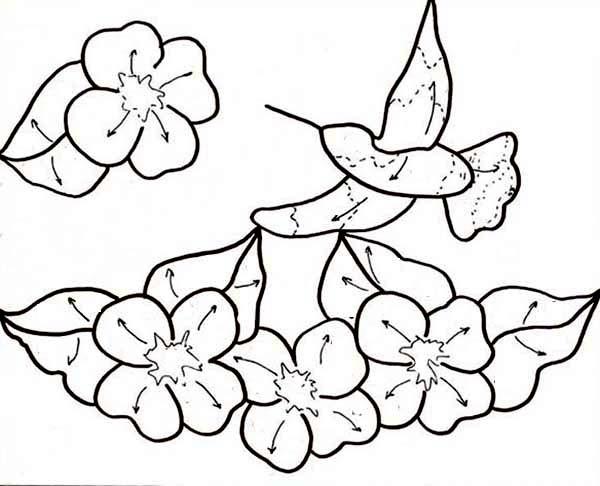 Hummingbirds, : humming-bird-pattern-coloring-page.jpg