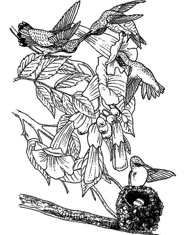 Hummingbirds, : hummingbird-activity-on-a-coloring-page-to-color.jpg