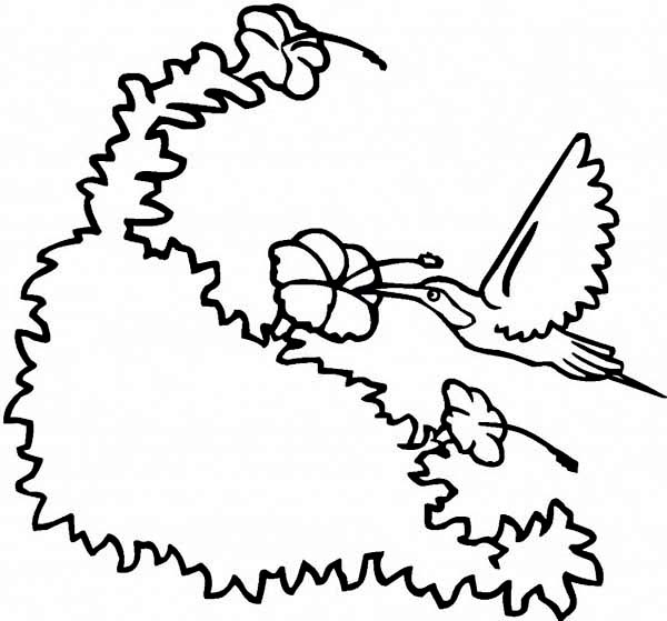 Hummingbirds, : hummingbird-extract-nectar-from-a-flower-on-hummingbird-coloring-page.jpg
